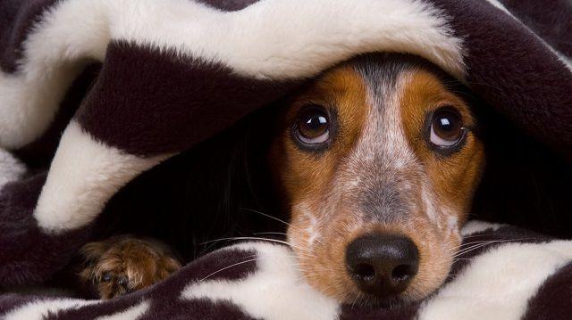 Petárdastop! Így óvd a kutyusod újévkor!