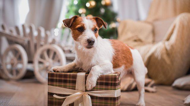 Lepje meg kutyusát is az ünnepekkor!