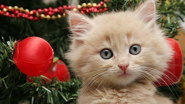 7 tipp az első cicás karácsonyra