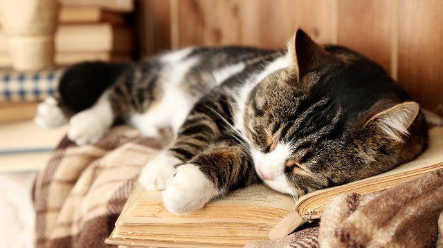 Fiatalos lendület: így gondoskodjon idősödő cicájáról