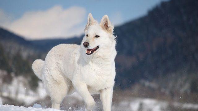 Havas hegyi kalandok kutyusunkkal