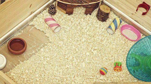 A megfelelő berendezés a kisállatok ketreceiben: aljzat, alom és fekhely