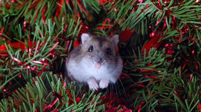 5+1 karácsonyi meglepetés kisállatoknak