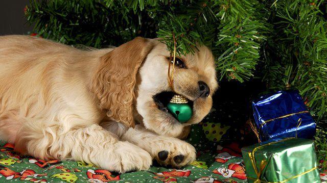 Karácsonyi kutyás kalandok