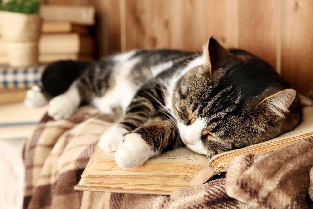 Whiskas | Öreg macska, nem vén cica - Az idős kedvenc gondozása