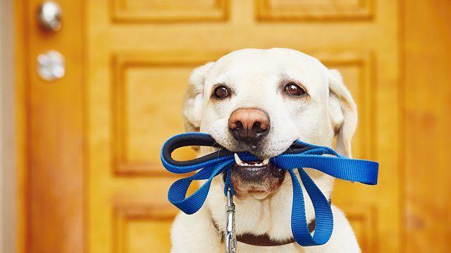 Állati karnevál – kutyák és kiegészítőik
