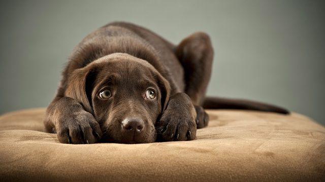 Hogyan legyünk kutyusunk segítségére, amikor fél?