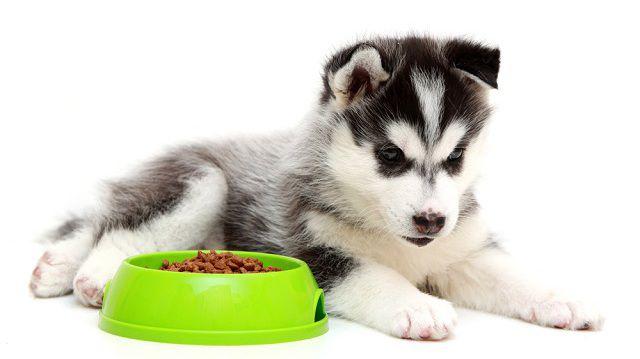 Fehérjeforrások érzékeny gyomrú kutyusok számára