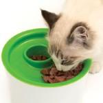 Catit cica önetető