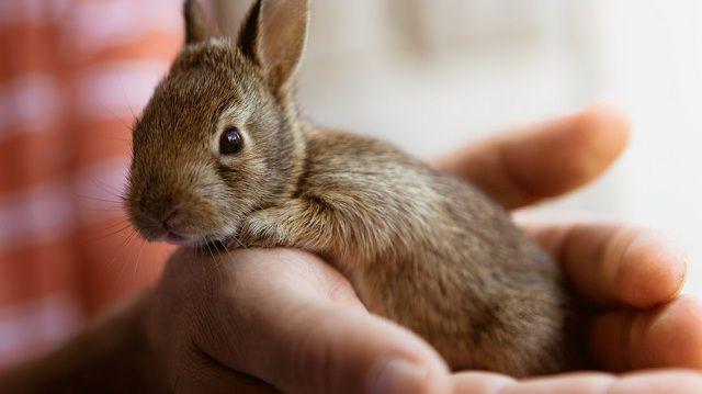 Húsvéti meglepetés, több évi felelősség