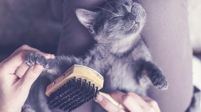 Ápolt cica, boldog cica