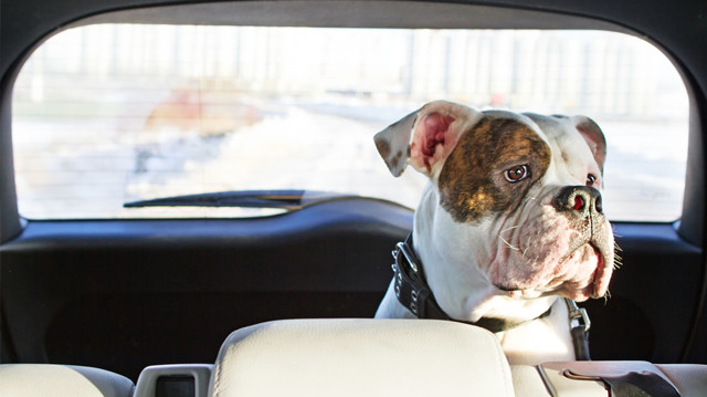 Rosszul van kedvence a kocsiban?