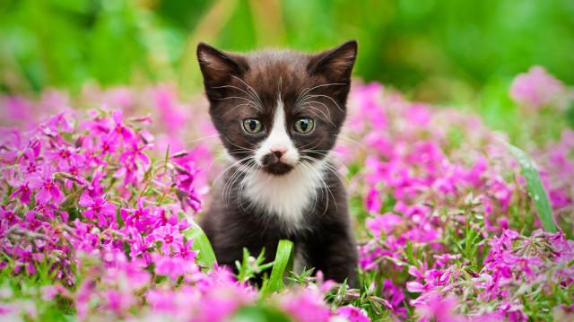 Macskajaj! Tavaszi veszélyek a kertben
