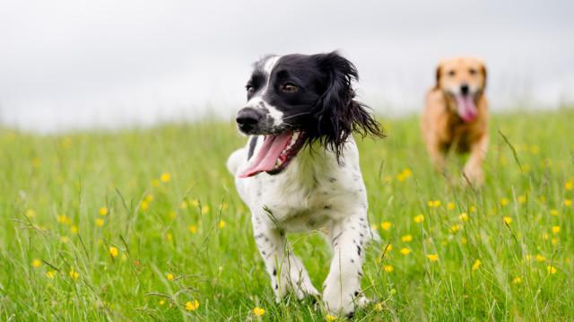 Ismerkedési etikett: így készítse fel kutyusát