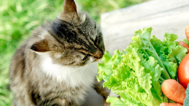 5+1 vitamindús tavaszi falat bársonytalpúaknak