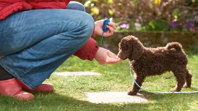 Hogyan kezdjek kutyusommal klikkerezni?