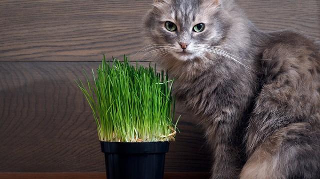 A hónap legjobb természetes étrend-kiegészítői cicáknak