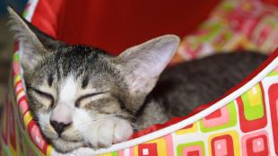 Miről álmodik a cica? A tökéletes pihenőhelyről!