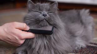 Szőrszálhasogatás – profi ápolás és védelem cicáknak