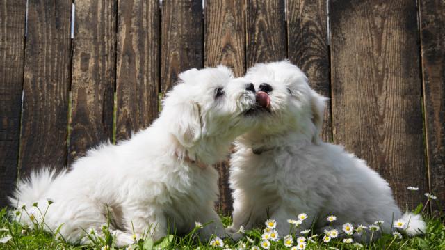 Májusi kutyaszerelem, 5 tipp a tökéletes randihoz