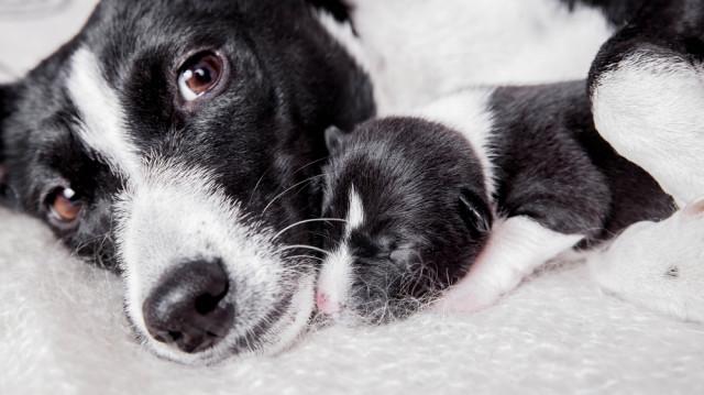 Kutyaanyák napja, így gondoskodj a kismamáról