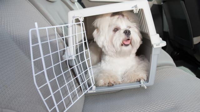 Újra úton, 5+1 tipp kutyával utazóknak