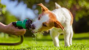 Hűsítő meglepetések kutyusoknak