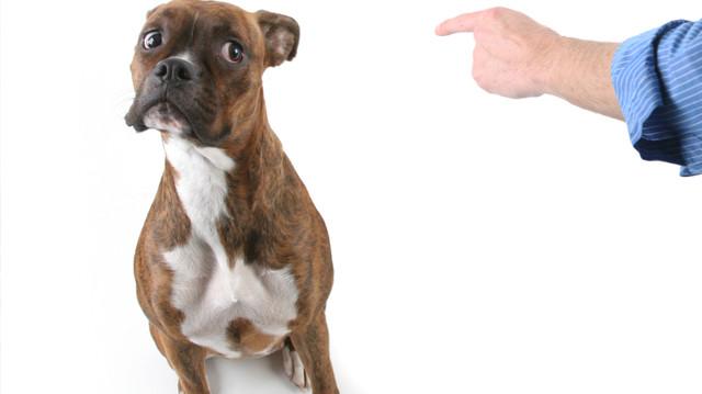 Hogyan és mikor büntessük a kutyát?