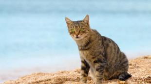 Cicával a vízpartra? Nem lehetetlen!