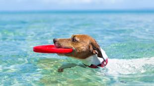 A hónap legjobb állatos játékai nyaraláshoz