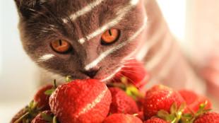 A 7 legjobb hűsítő falat cicáknak