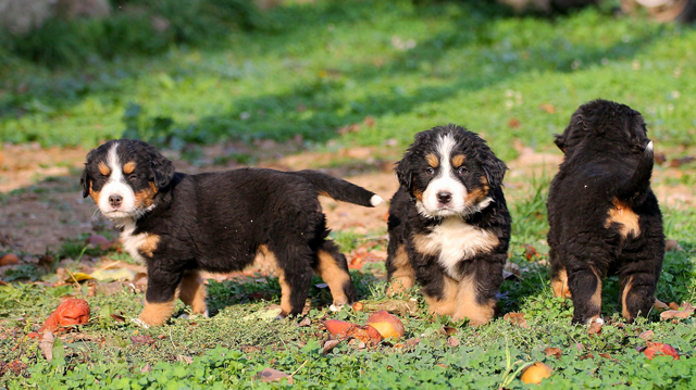 Mennyi idősen kezdjük tanítani kutyusunkat?