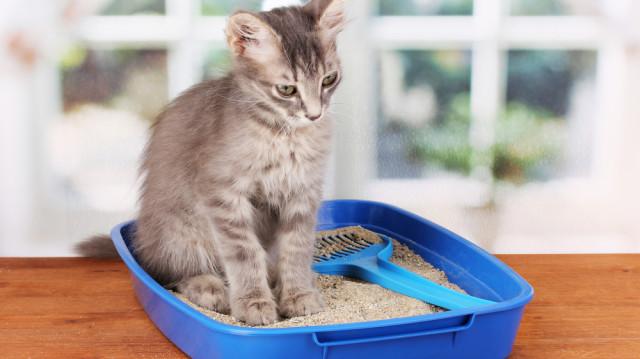 Álom-alom kisokos cicáknak