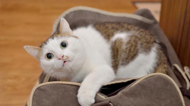 A változás jó – de nem a cicáknak!
