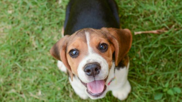 Kutyanevelés 5 egyszerű lépésben