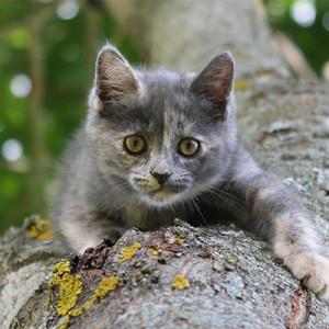 A macskák nem képesek fejjel előre lemászni a fákról…