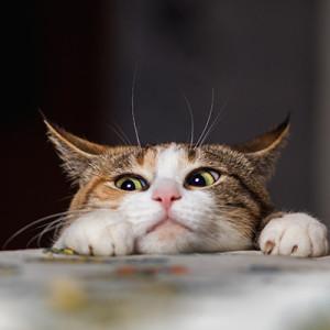 A macskának kilenc élete van…