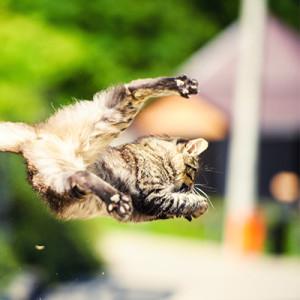 A cicák akár 20 méteres zuhanást is képesek túlélni…