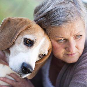 A kutyák átlagban 1 naptári év alatt ötöt öregednek kisebb fajták esetén…