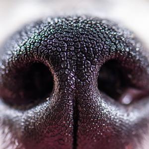 A kutyák orrlenyomata…