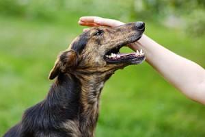 A kutyák elkülönítik, amit mondunk, attól, ahogyan mondjuk…