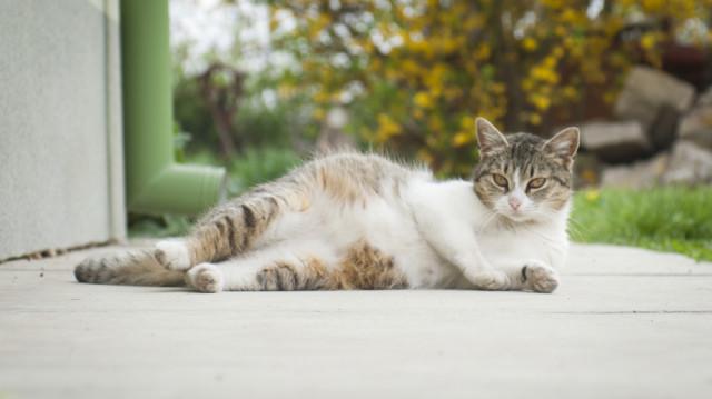 Gondtalan várakozás: így etesse vemhes cicáját