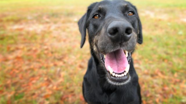 Tiszta fogakat a kutyusoknak is!