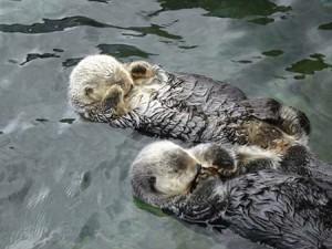 A vidrák alvás közben megfogják egymás kezét…