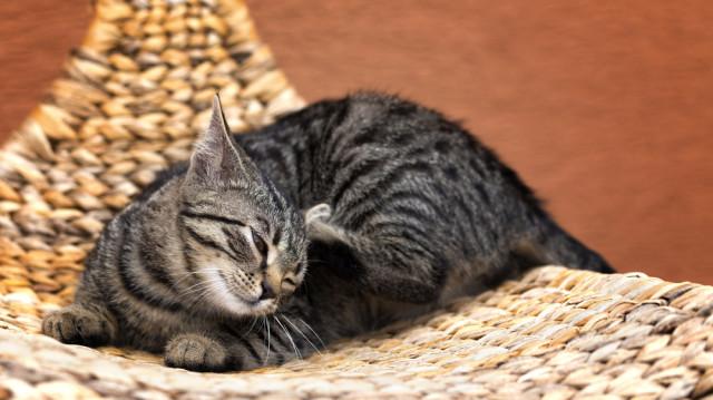 Bolhacirkusz – intézkedések a cicák védelmében