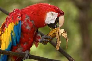 A papagájok a legtovább élő madarak…