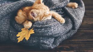 5+1 tipp őszi kiscicák felneveléséhez