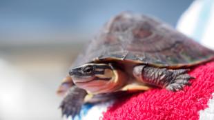 4+1 tipp teknősök teleltetéséhez