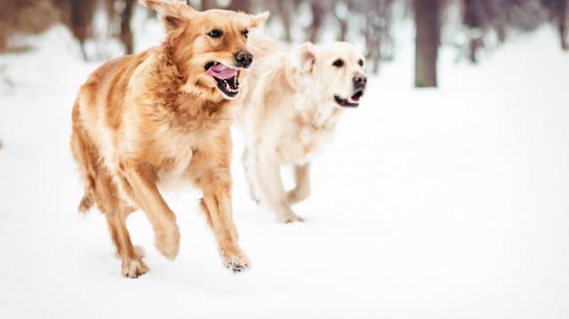 A jég hátán is boldogan, így óvja kutyusa mancsait!