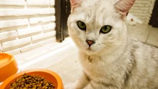 Energiadús falatok kerti cicáknak